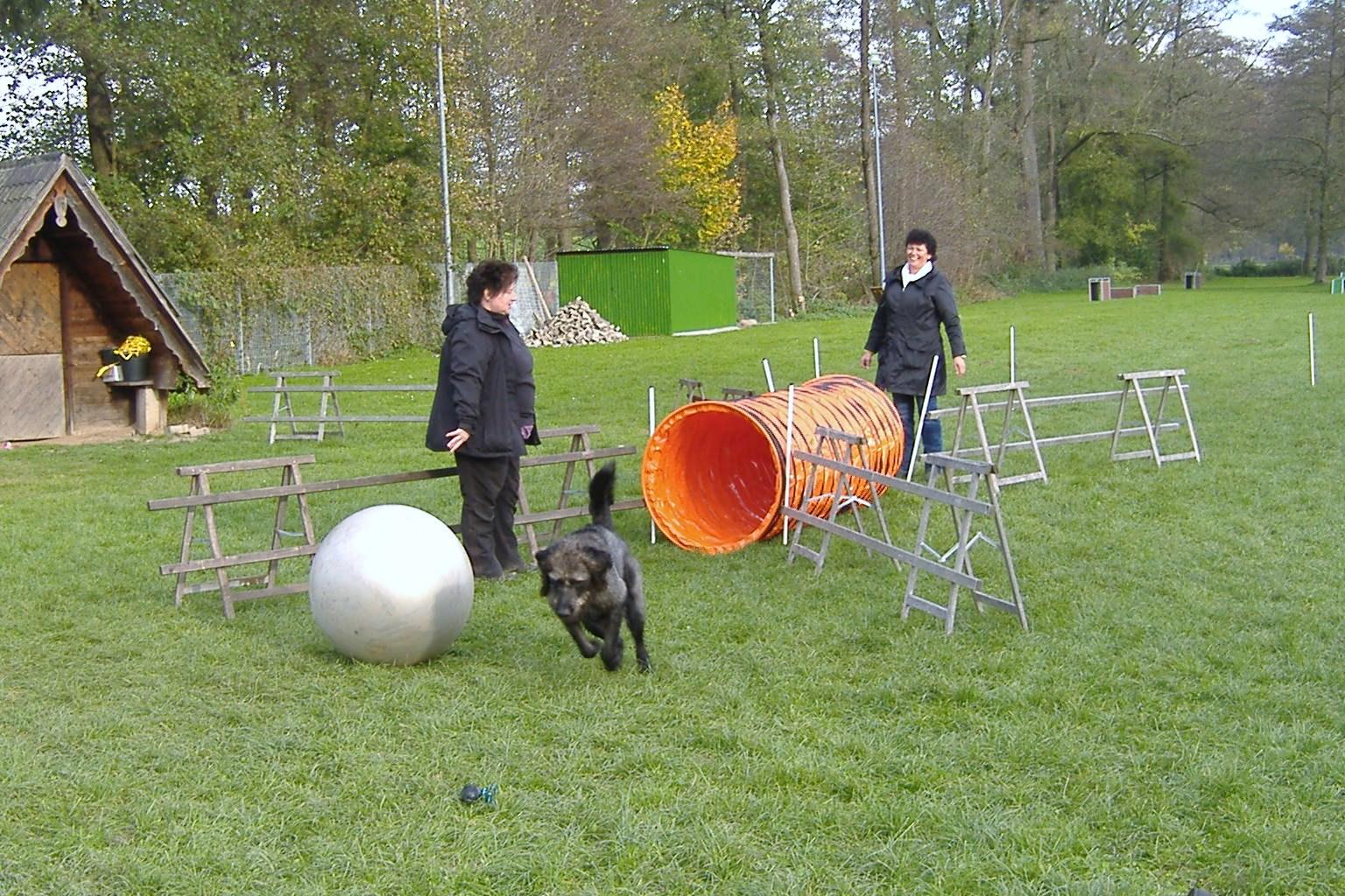 Treibball-Seminar 017